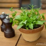 Cute herb pot and chess-piece-like S&P shakers